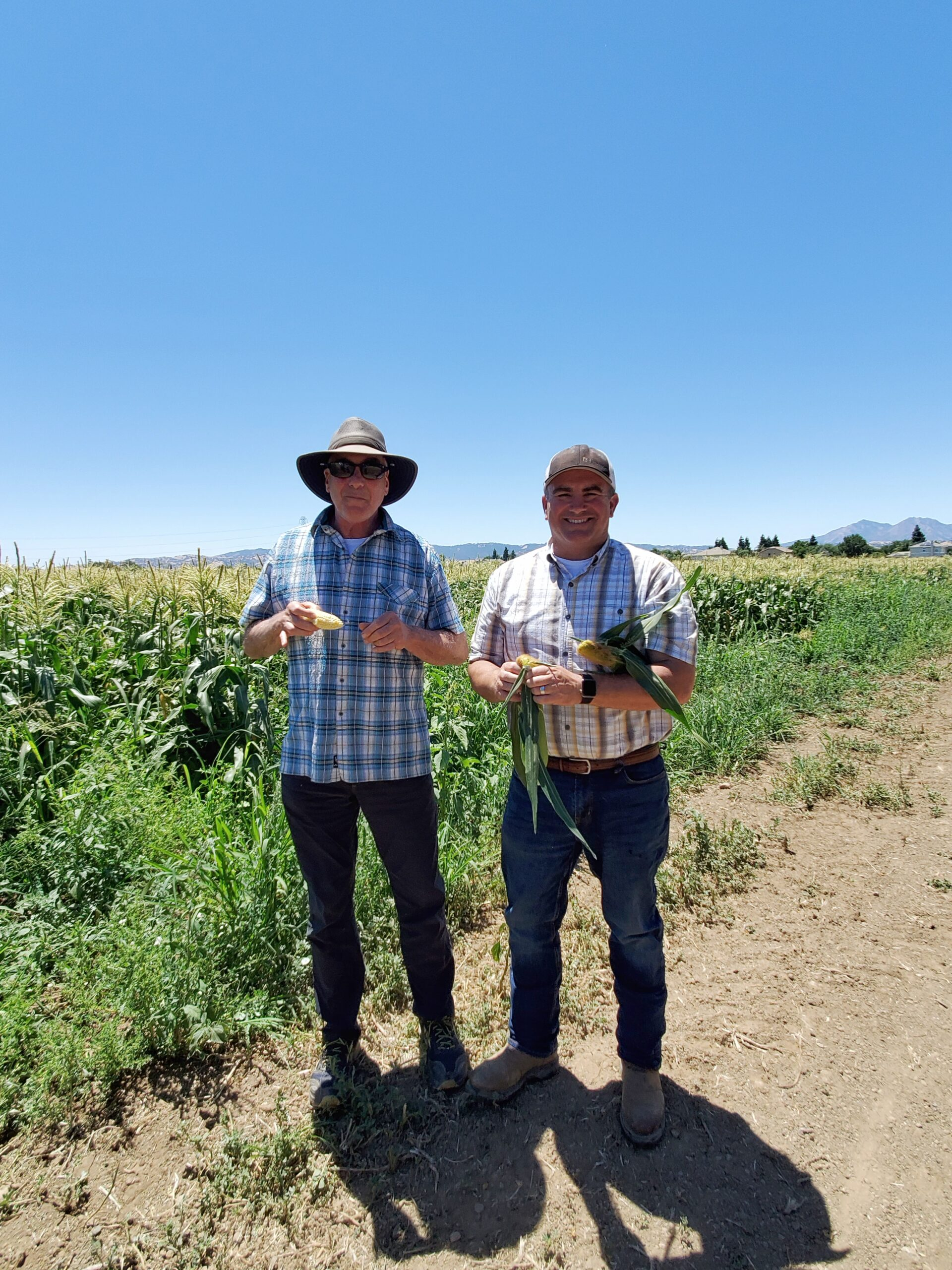 This image has an empty alt attribute; its file name is Robert-and-Patrick-Dwelley-Corn-Field-.jpg