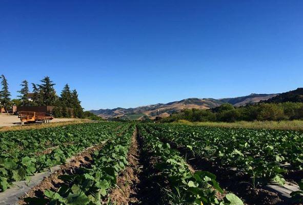 Sunrise Organic Farm