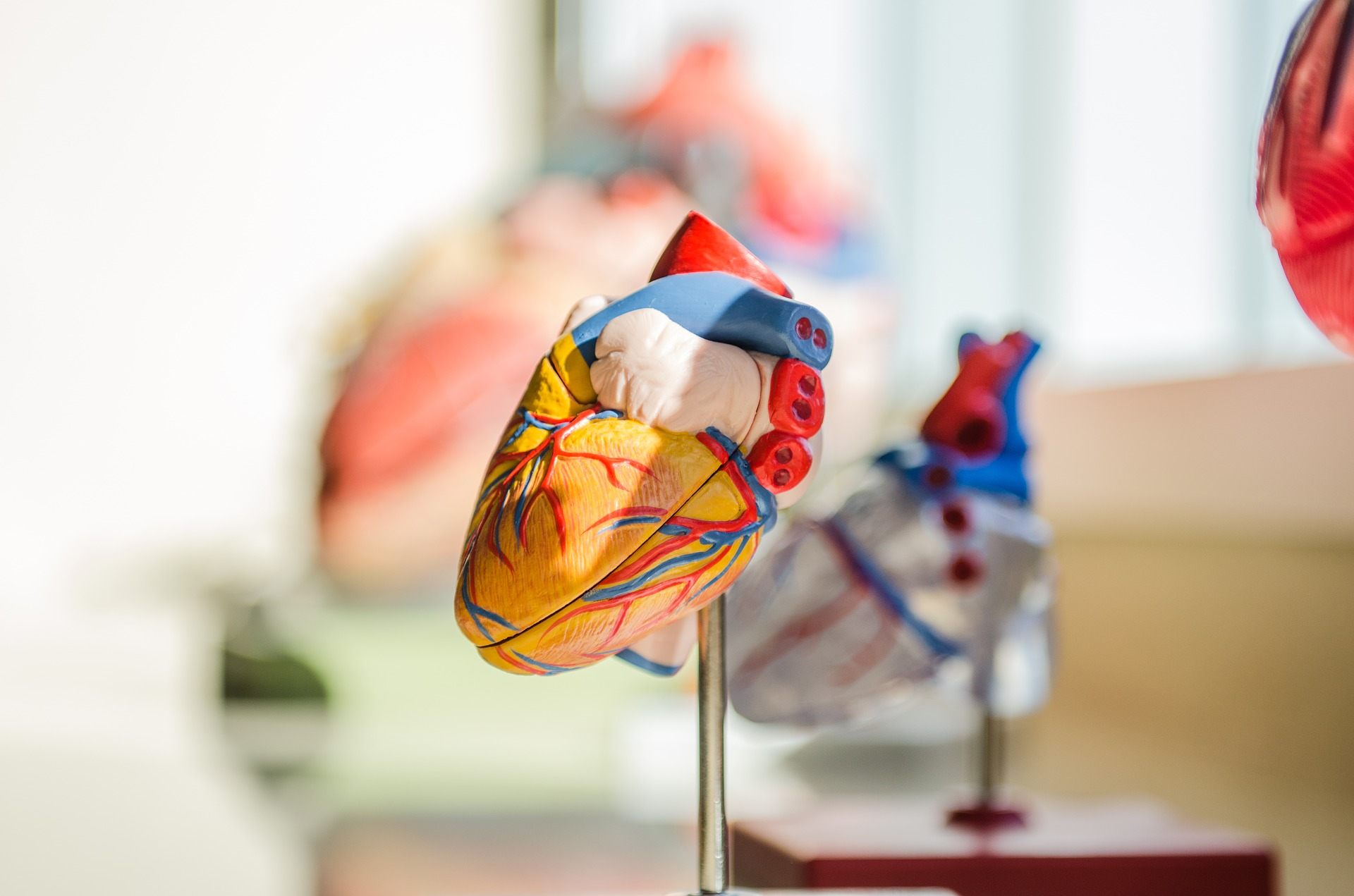 Aortic and Vascular Services