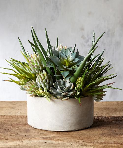 Faux Aloe Succulent