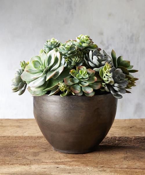 Large Faux Succulents