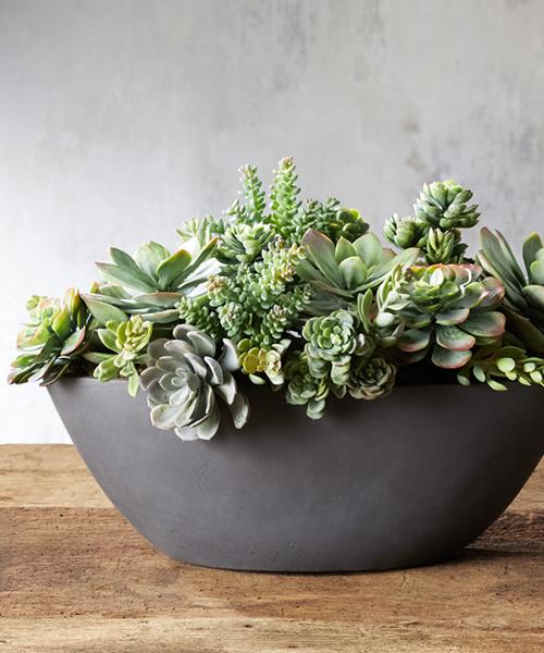 Faux Mix Succulents