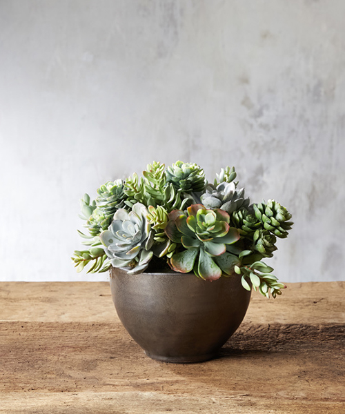 Small Faux Succulents