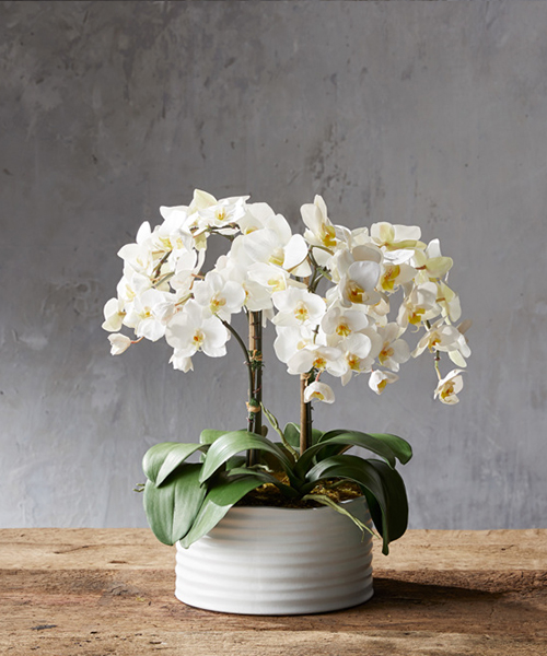 Faux Orchid in White Planter