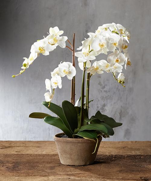 Faux White Orchid | Rustic Florals