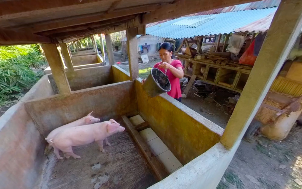 Pig Virtual Reality Experiences