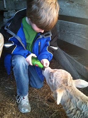 Acorn Lane Farm Animals in LaGrange, Kentucky