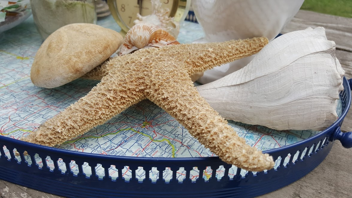 nautical map tray sea shells