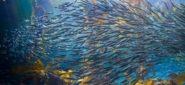 Losing Nemo: How Herding Suppresses Personality