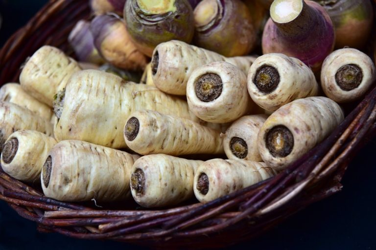 a basket of freshly gathered parsnips