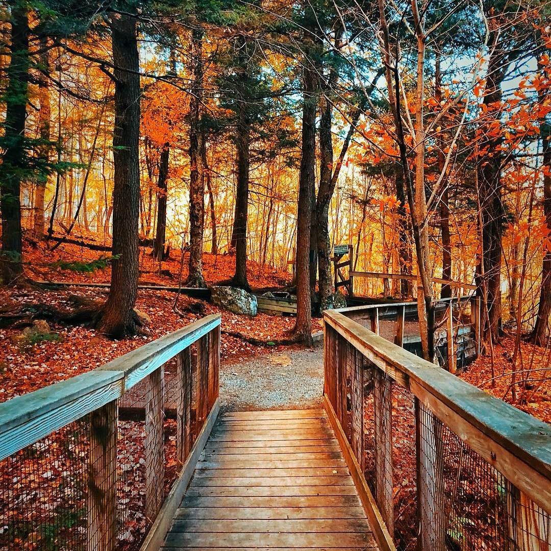 Outdoor Fall Scenery