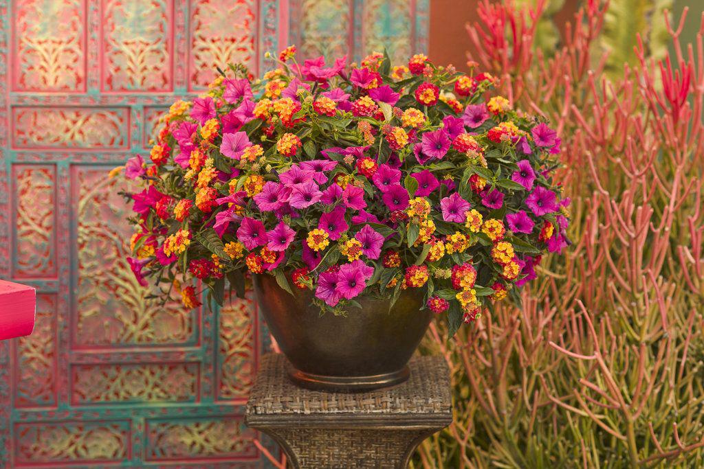 Rustic Floral Arrangement Ideas