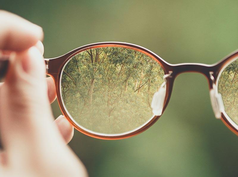 Eyeglasses focused on trees