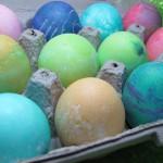 egg-cting egg color dog treat biscuit/recipe