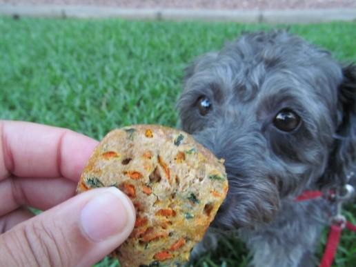 carrot & kale dog treat/biscuit recipe