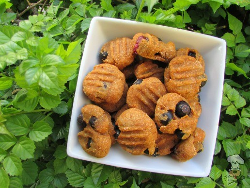 (wheat and dairy-free, vegetarian) blueberry pumpkin dog treat/biscuit recipe