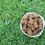 (wheat, gluten, grain and dairy-free, vegan, vegetarian) cranberry ginger pumpkin dog treat/biscuit recipe