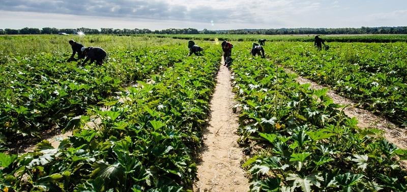"The ""Indigenous Uber"" Program Serving California Farmworkers"