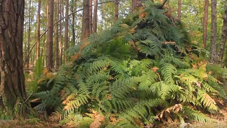 Build a bushcraft shelter