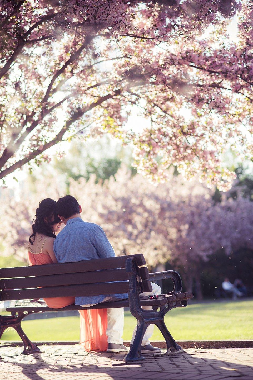 AD-Edmonton-Cherry-Blossoms-engagement-_0027