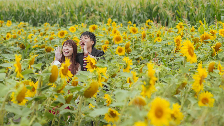 Edmonton-sunflower-engagement-photo-session-miruku-11