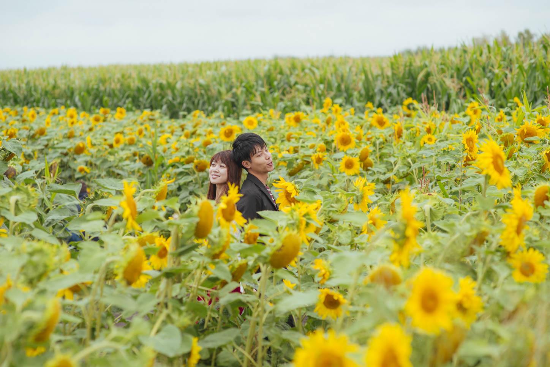 Edmonton-sunflower-engagement-photo-session-miruku-9