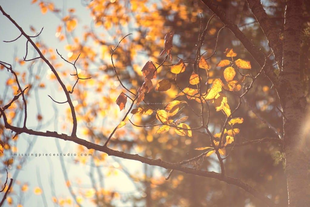 Fall Leaves Dry Brown tree