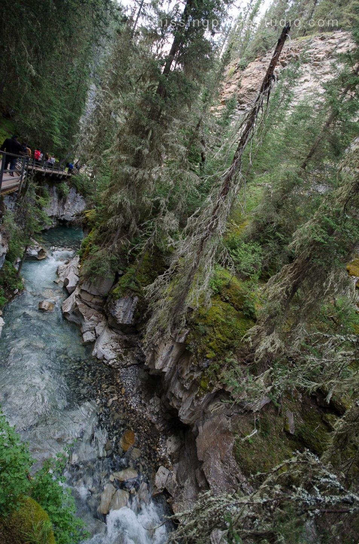 Johnston Canyon Creek-Banff Canada-Alberta014