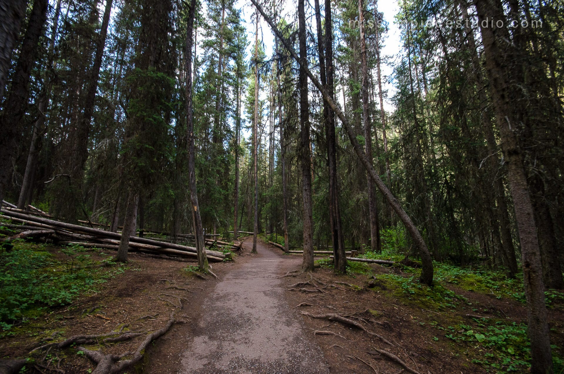 Johnston Canyon Creek-Banff Canada-Alberta047