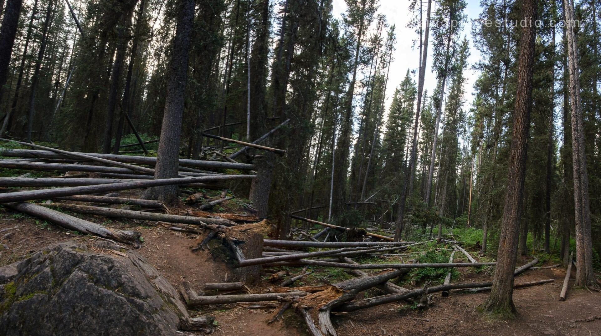 Johnston Canyon Creek-Banff Canada-Alberta062