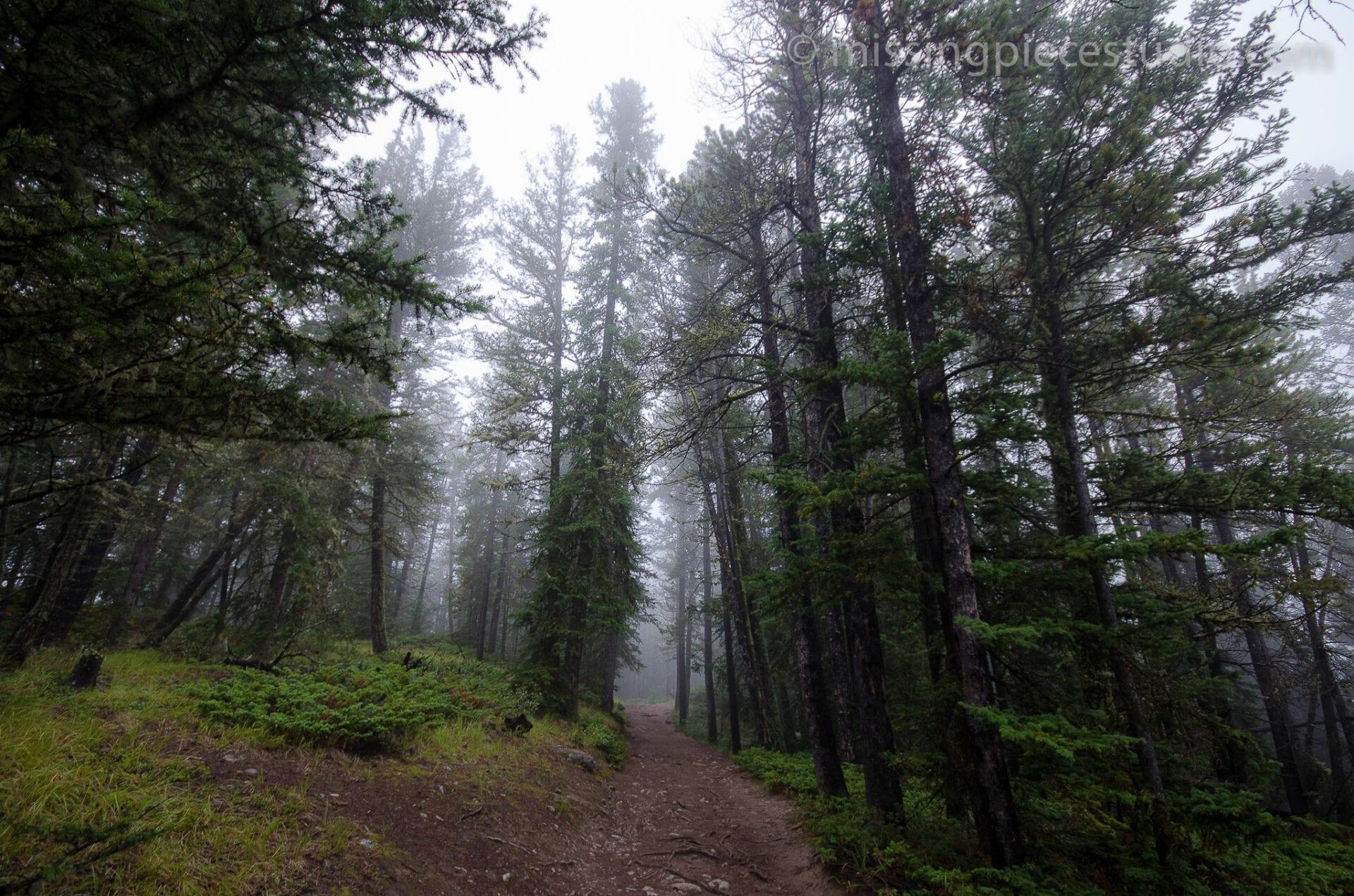 Tunnel Mountain -Banff Canada-Alberta046