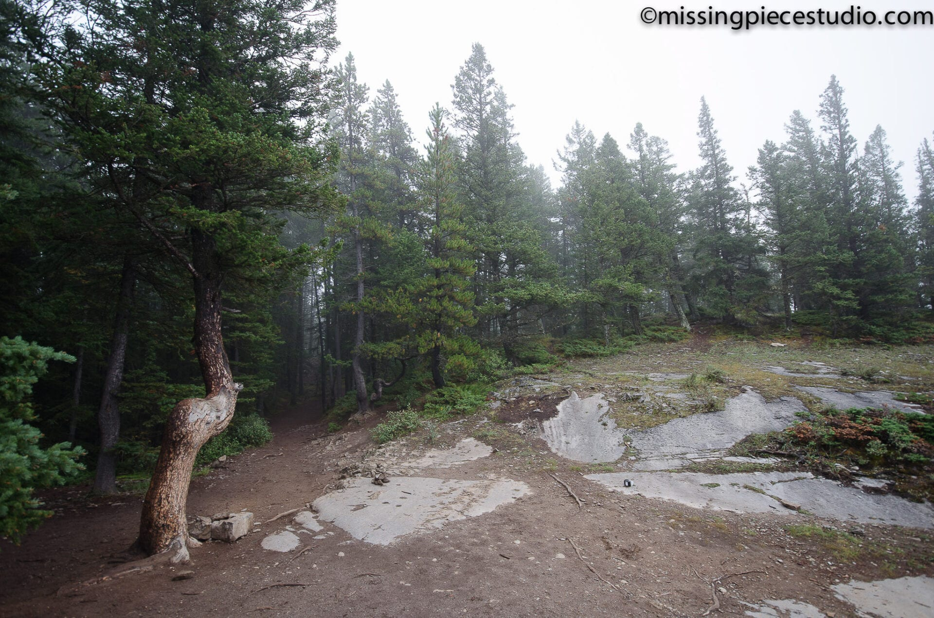 Tunnel Mountain -Banff Canada-Alberta055