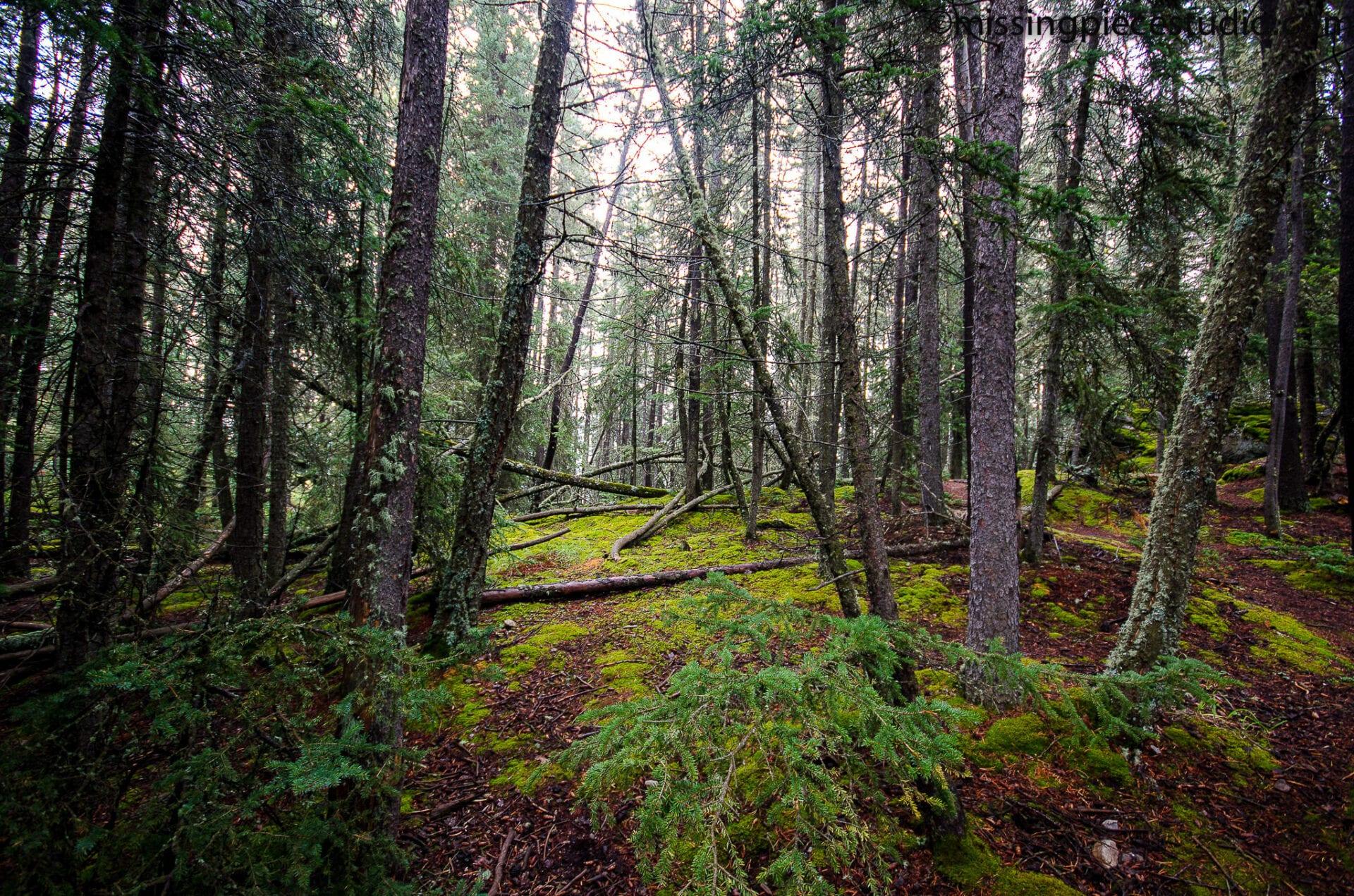 Tunnel Mountain -Banff Canada-Alberta079