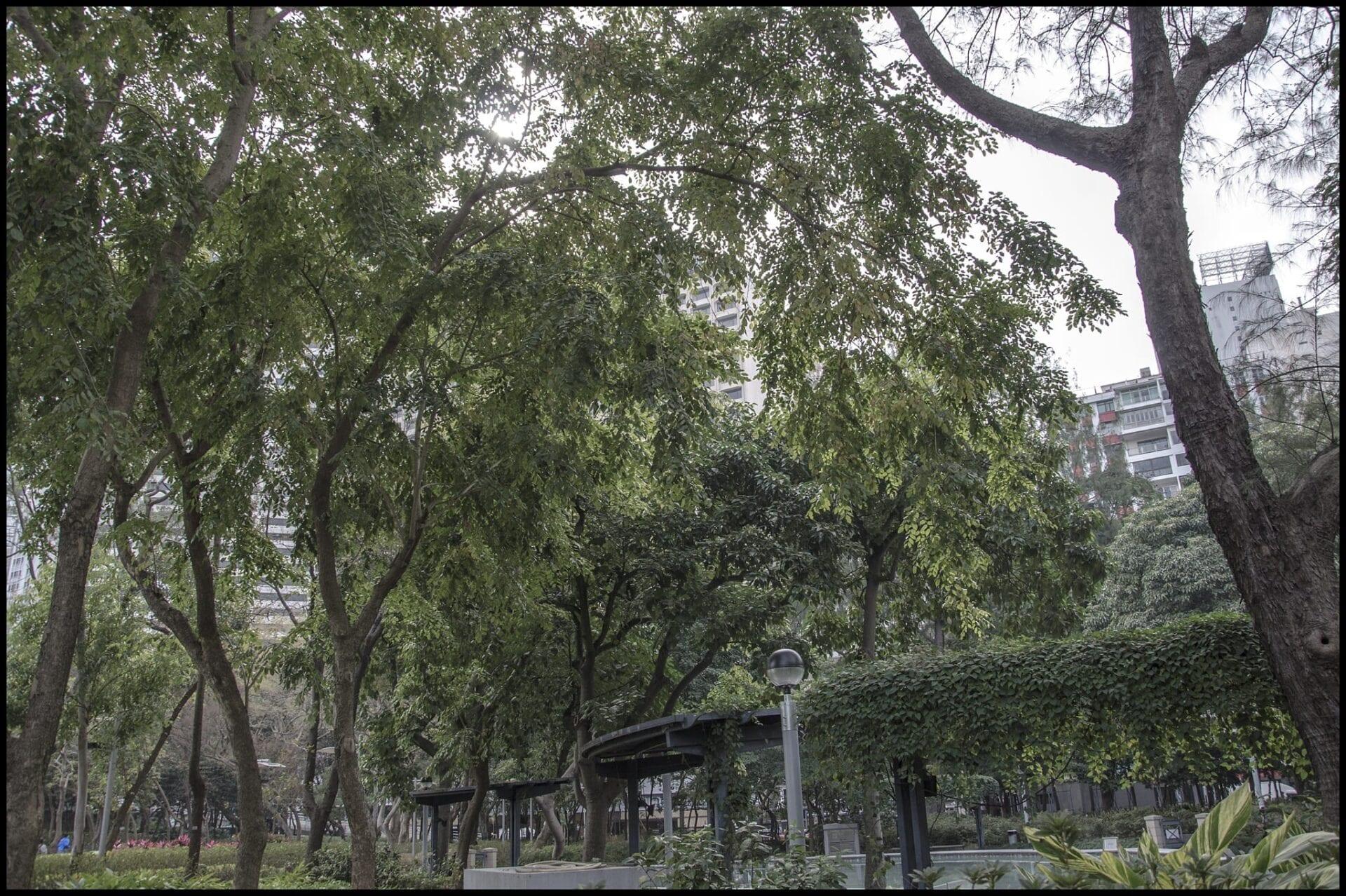 Hong Kong Victoria Park Photography_092