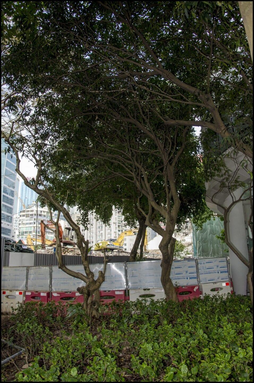 Hong Kong Victoria Park Photography_094