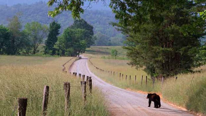 Mal posso ver o urso! | Inglês Todos os Dias #450
