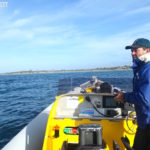 【澳洲旅遊】袋鼠島 .::[Day 2] 與海豚共泳、小龍蝦餐廳、海獅灣::.