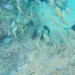 【Hawaii Travel】Morning snorkel at Hanauma Bay