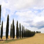 托斯卡尼遊記 | 佛羅倫斯之外的Tuscany・悠哉吃貨自由行 [托斯卡尼自駕/行程規劃分享]