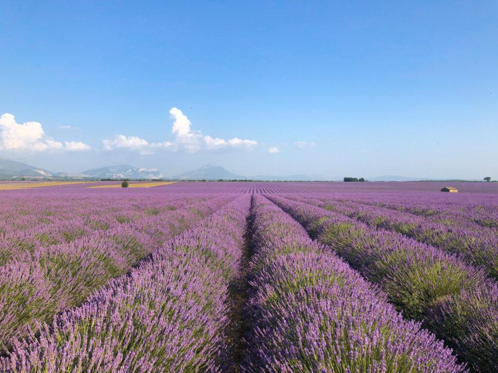 普羅旺斯薰衣草田遊記 | 男友加分必備「南法Provence最美拍照地圖」