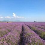 普羅旺斯薰衣草田遊記   男友加分必備「南法Provence最美拍照地圖」