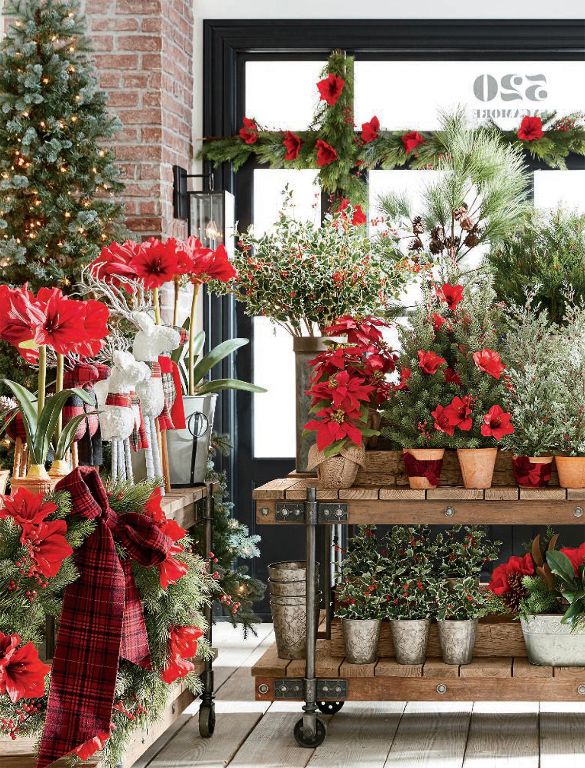 Holiday Seasonal Botanical