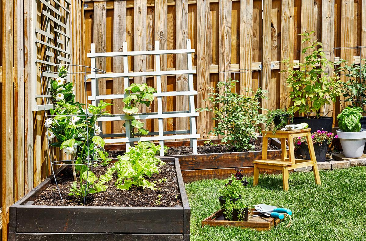 Garden in a Small Backyard