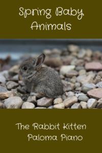 Paloma Piano - Spring Baby Animals - Rabbits