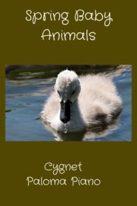 PalomaPiano - Spring Baby Animals - Cygnet