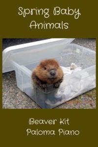 Paloma Piano - Spring Baby Animals - Beaver Kit