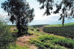 A picture from some farm land near the sea