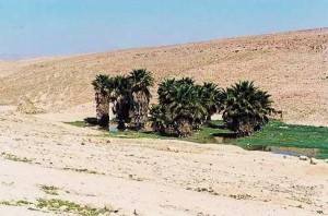 An Oasis in the Negev.