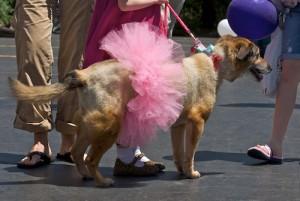 SRBA - Pet Parade - 2008 - 0805170083 G.sized