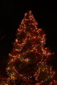 SRBA - Tree Lighting - 2007 - CAS 8449.sized